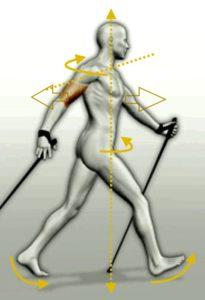 La importancia de la rotación que ejerce nuestra espalda, trabajando el eje escapular y el eje pelvico, dando lugar a un movimiento muy beneficioso para nuestra columna vertebral y espalda en general.