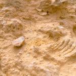 Fósiles Moncayo Guardamar